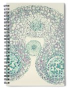 Lily Anther Lm Spiral Notebook