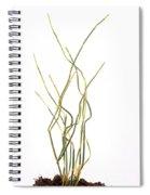 Ma Huang Spiral Notebook