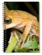 Marsupial Frog Spiral Notebook
