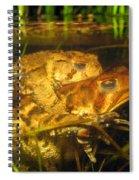 Mating Toads Spiral Notebook