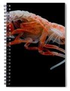 Mesopelagic Amphipod Spiral Notebook