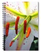 Oriental Lily Hybrid Named Mojave Spiral Notebook