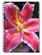 Oriental Lily Named La Mancha Spiral Notebook