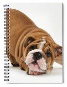 Playful Bulldog Pup Spiral Notebook