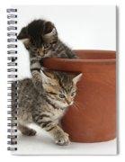 Playful Kittens Spiral Notebook