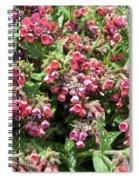 Pulmonaria Named Raspberry Splash Spiral Notebook