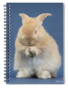 Rabbit Grooming Spiral Notebook