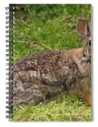 Rabbit Spiral Notebook