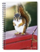Red Squirrel On Railing Spiral Notebook