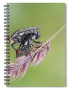 Reproduction - At The Height Of Bliss Spiral Notebook