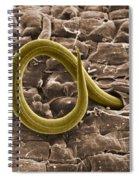 Root Knot Nematode Sem Spiral Notebook