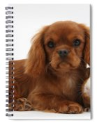 Ruby Cavalier King Charles Spaniel Pup Spiral Notebook