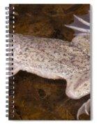 Sabana Surinam Toad Spiral Notebook