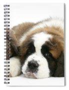 Saint Bernard Puppy With Rabbit Spiral Notebook