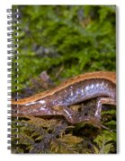 Seepage Salamander Spiral Notebook