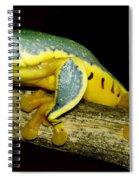 Splendid Leaf Frog Spiral Notebook