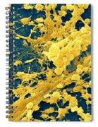 Staphylococcus Biofilm Spiral Notebook