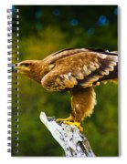 Steppe Eagle Spiral Notebook