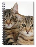 Tabby Kittens Spiral Notebook