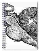 Third And Fourth Ventricles Of The Brain Spiral Notebook