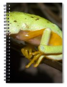 Tree Frog Spiral Notebook