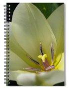 Tulip Named Perles De Printemp Spiral Notebook