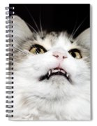 Vampire Cat Spiral Notebook