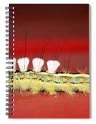 White Tussock Caterpillar Spiral Notebook