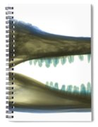 X-ray Of American Alligator Spiral Notebook