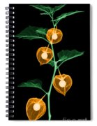 X-ray Of Chinese Lantern Plant Spiral Notebook