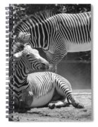 Zebras In Black And White Spiral Notebook