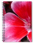 Zonal Geranium Named Candy Fantasy Kiss Spiral Notebook