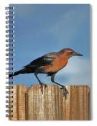 27- Grackle Spiral Notebook