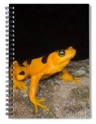 Harlequin Toad Spiral Notebook