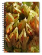 African Blood Lily Or Fireball Lily Spiral Notebook