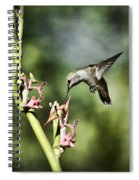 Anna's Hummingbird  Spiral Notebook