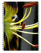 Asiatic Lily Named Black-eyed Cindy Spiral Notebook
