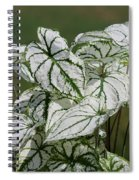Caladium Named White Christmas Spiral Notebook