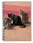 3 Cats Looking Pensive Spiral Notebook