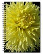 Dahlia Named Colwood Ann Spiral Notebook