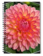 Dahlia Named Hillcrest Suffusion Spiral Notebook