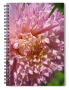 Dahlia Named Siemen Doorenbosch Spiral Notebook