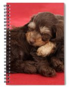 Doxie-doodle Puppies Spiral Notebook
