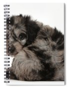 Doxie-doodle Puppy Spiral Notebook