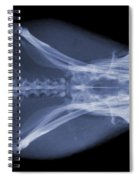 Eastern Diamondback Rattlesnake Head Spiral Notebook