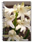 Hyacinth Named Aiolos Spiral Notebook