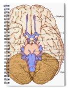 Illustration Of Cranial Nerves Spiral Notebook