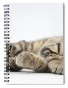 Kitten Companions Spiral Notebook