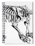Megatherium, Extinct Ground Sloth Spiral Notebook