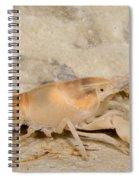 Miami Cave Crayfish Spiral Notebook